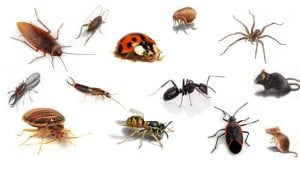 images of a variety of bugs commonly known as pests