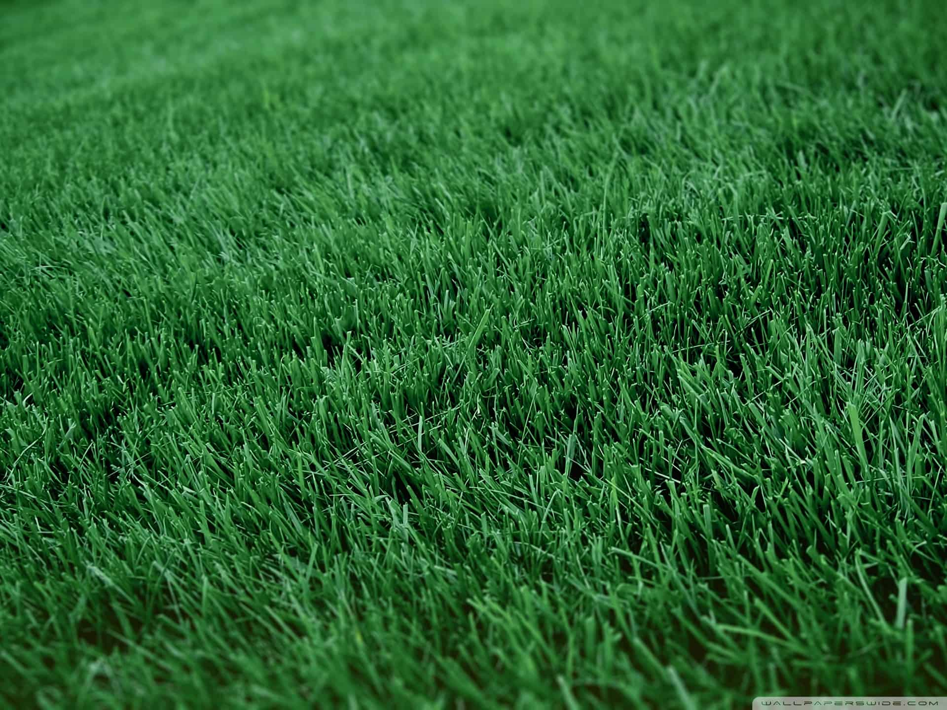close-up of a green, healthy, lush lawn