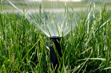 green grass with a sprinkler head sticking out of the ground and spraying water