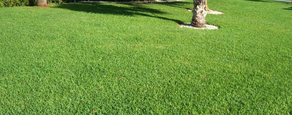Lawn Tips: Don't Scalp Your Lawn