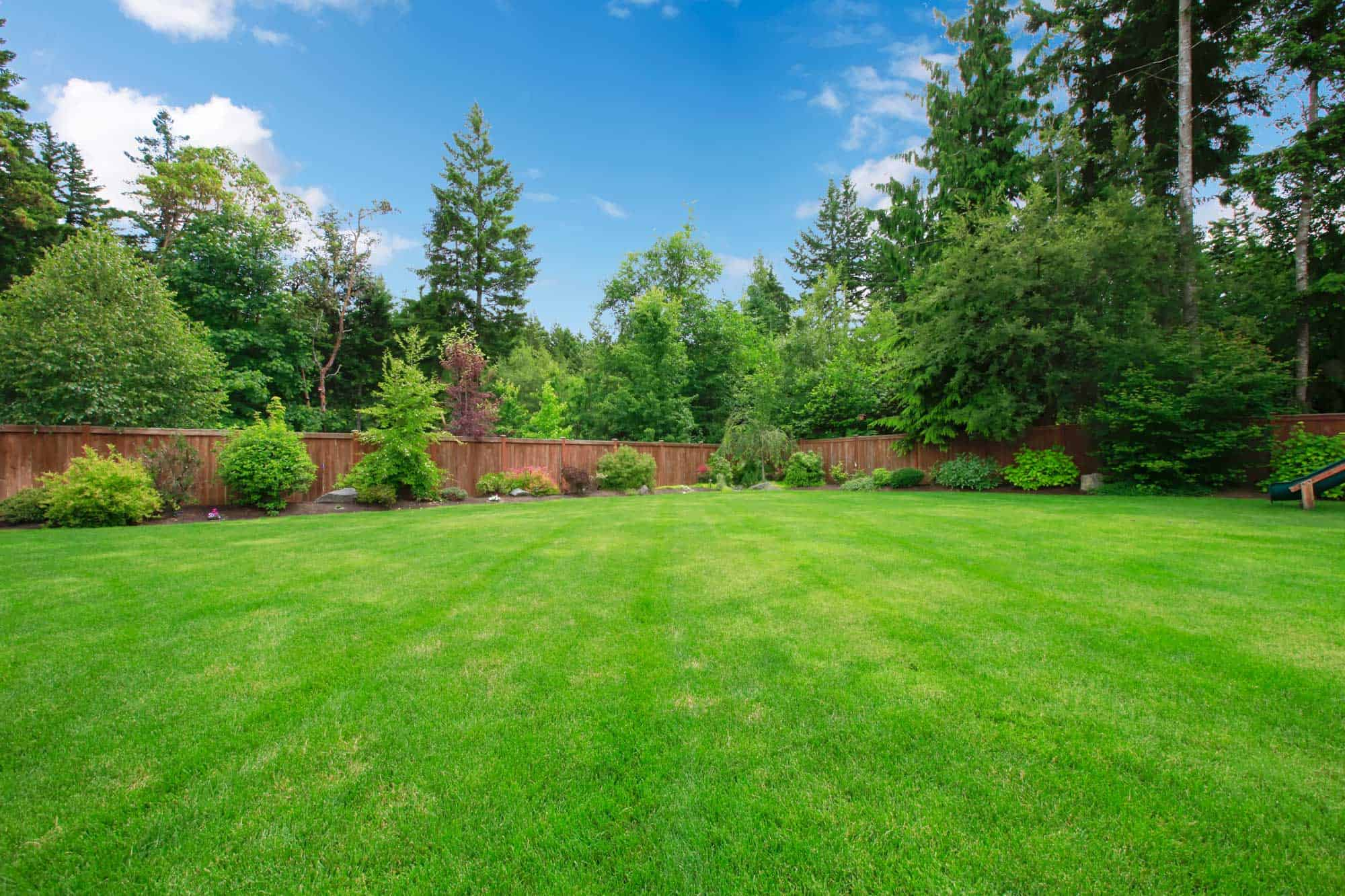 landscaped backyard with freshly cut grass