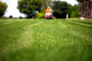 Man mowing lawn with focus on freshly cut grass