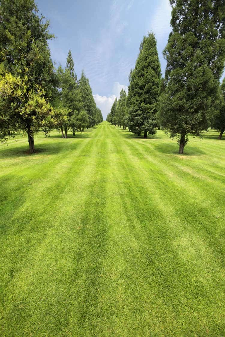 freshly cut grass in park with trees