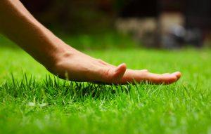 Hand above green fresh spring grass in backyard