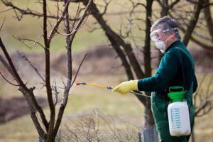 man spraying dormant oil on trees