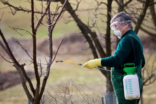 man spraying dormant oil on trees